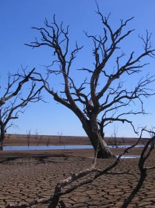 Cairn Curran: dead trees in the dry, cracked mud - only the ancient river course remains